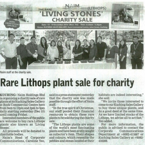 Rare Lithops plant sale for charity