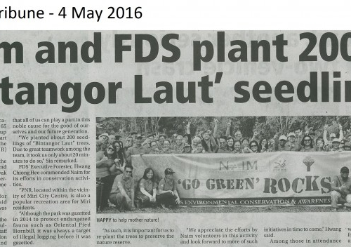 Naim an FDS plant 200 'Bintangor Laut' seedings